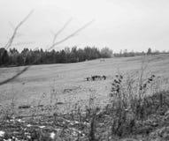 Champ noir et blanc photographie stock libre de droits