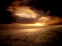 Champ pendant le coucher du soleil Photographie stock