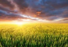 Champ pendant le coucher du soleil Paysage agricole à l'heure d'été Paysage industriel comme fond photo libre de droits