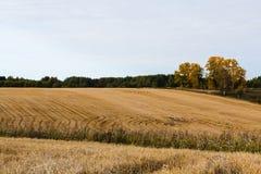 Champ planté avec du blé en automne Images libres de droits