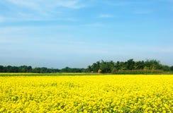 Champ rural de musterd au Bangladesh photographie stock libre de droits