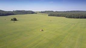 Champ sans fin aérien de paysage avec des meules de foin parmi des forêts banque de vidéos