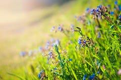 Champ sauvage des fleurs Photo libre de droits