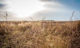 Champ sec dans une journée de printemps ensoleillée Photographie stock