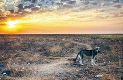 Champ sinistre de paysage après l'apocalypse du feu photographie stock libre de droits