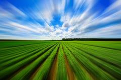 Champ végétal d'agriculture avec la tache floue de mouvement images stock
