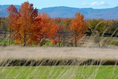 Champ Vermont d'automne photographie stock libre de droits