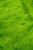 Champ vert Images stock