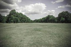 Champ vert amorti de fond d'herbe et d'arbres Photographie stock