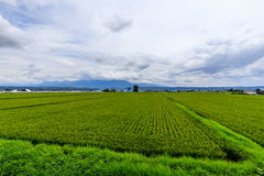 Champ vert au Hokkaido Image libre de droits