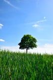 Champ vert avec l'arbre solitaire Images stock