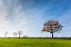 Champ vert avec un arbre et un ciel bleu Photographie stock