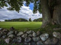 Champ vert avec un mur en pierre et un arbre trois-refoulé image libre de droits
