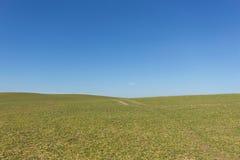 Champ vert, ciel bleu d'espace libre, fond rural de paysage Photos stock