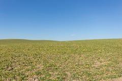 Champ vert, ciel bleu d'espace libre, fond rural de paysage Image stock