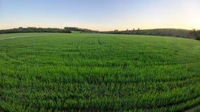 Champ vert complètement de blé et de ciel bleu image stock