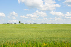 Champ vert contre le ciel nuageux Photographie stock libre de droits