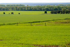 Champ vert de blé et de ressort Photographie stock