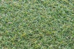 Champ vert de fond d'herbe Photographie stock