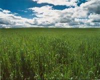 Champ vert entrant dans le ciel bleu photos libres de droits