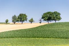 Champ, vert et or d'agriculteurs Photo libre de droits