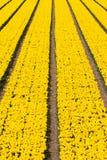 Champ vertical des tulipes Photographie stock