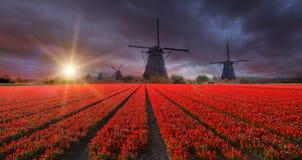 Champ vibrant de tulipes avec les moulins à vent néerlandais Photographie stock