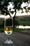 champagne Royaltyfria Foton