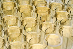 Champagne. Glasses arranged next to each other Royalty Free Stock Photography