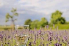 Champagne adorabile e delizioso della lavanda davanti ad un giacimento di fiori della lavanda Immagini Stock