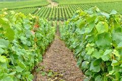 Champagne-Ardenne, Francia Fotografie Stock Libere da Diritti