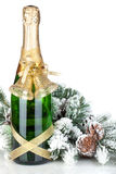 Champagne bottle, christmas decor and fir tree Royalty Free Stock Images