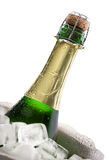 Champagne bottle on ice. Close-up of a cold bottle of champagne on ice with white background Royalty Free Stock Photo