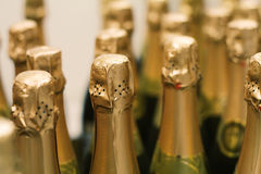 Champagne bottles. New champagne bottles in gold foil Royalty Free Stock Images