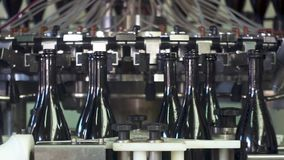 Champagne bottles on factory conveyor belt,wash bottles for bottling stock video footage