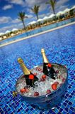 Champagne bottles on ice in a swimming pool. Champagne bottles on ice in a tropical swimming pool with palm trees in the distance Stock Image
