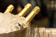 Champagne in bucket with ice. Bottle of champagne in bucket of ice Stock Photo