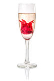 Champagne-Cocktail mit Hibiscusblume Lizenzfreie Stockfotos