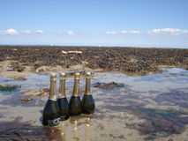 Champagne cooled in the sea Stock Images