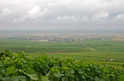 Champagne country (France). Rolling hills with grapevines in Champagne, France Royalty Free Stock Image