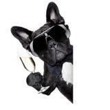 Champagne dog stock image