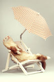 Champagne ferret portrait on beach chair in studio. Ferret portrait on beach chair in studio Stock Photo