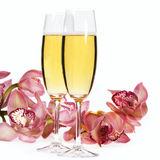 Champagne flutes. And flowers on white royalty free stock images