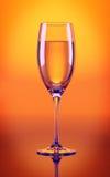 Сhampagne glass in orange Stock Photography