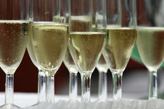 Champagne glasses. A group with  glasses of bubbly champagne Stock Image
