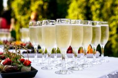 Champagne glasses being served on a party. Champagne glasses being served on outdoor party royalty free stock images