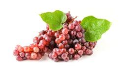 Champagne Grapes isolerade på vit bakgrund Fotografering för Bildbyråer