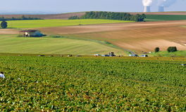 Champagne landascape during the  harvest Royalty Free Stock Image