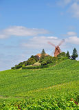 Champagne near Verzenay,France Stock Image