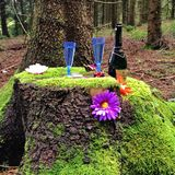 Champagne-ontvangst in het bos Stock Foto's